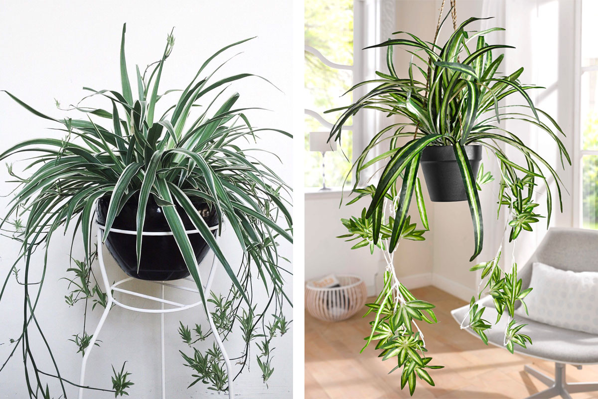 As melhores plantas para purificar a casa | The Sleep Journey plantas As melhores plantas para purificar a casa the sleep journey the best plants to purify a home 01