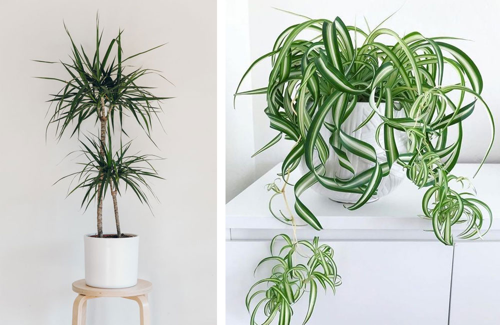 plants The best plants to purify a home the sleep journey the best plants to purify a home