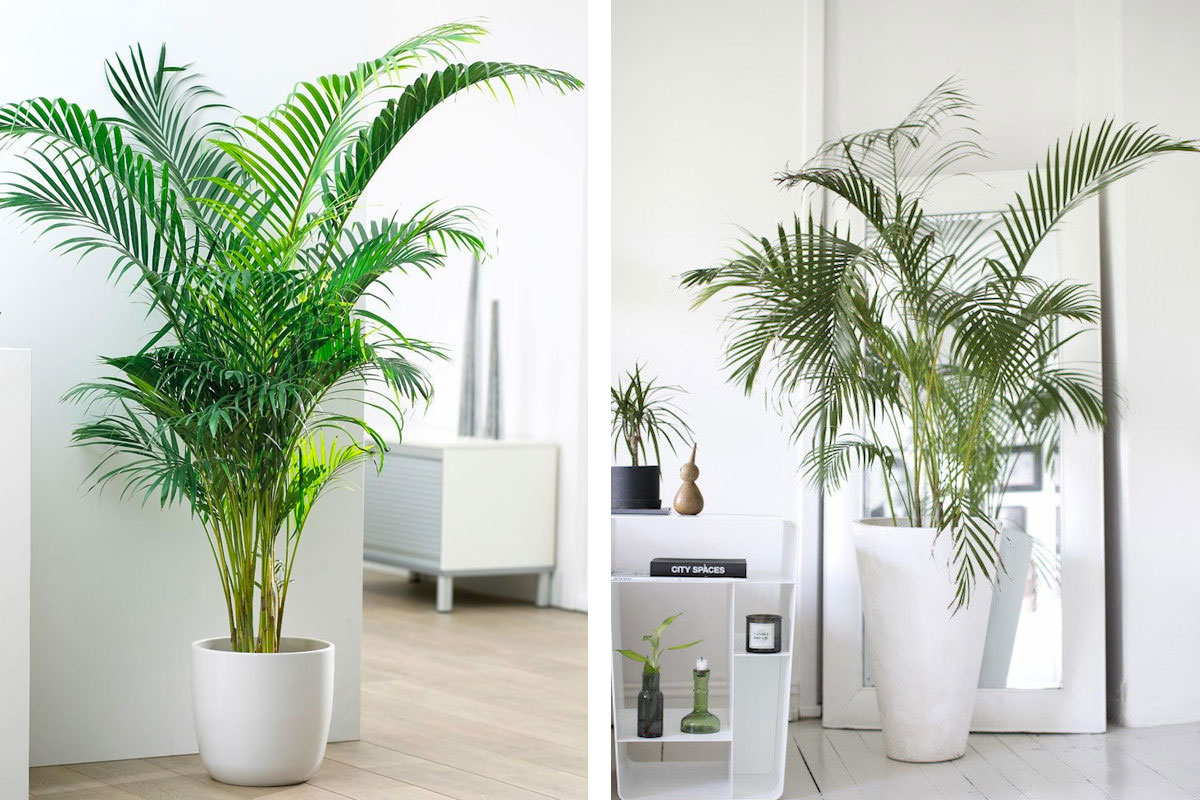 As melhores plantas para purificar a casa | The Sleep Journey plantas As melhores plantas para purificar a casa the sleep journey the best plants to purify a home 02